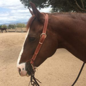 MC Leather BUllet Split Ear Headstall
