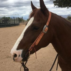 MC Leather Plain Slide Ear Headstall
