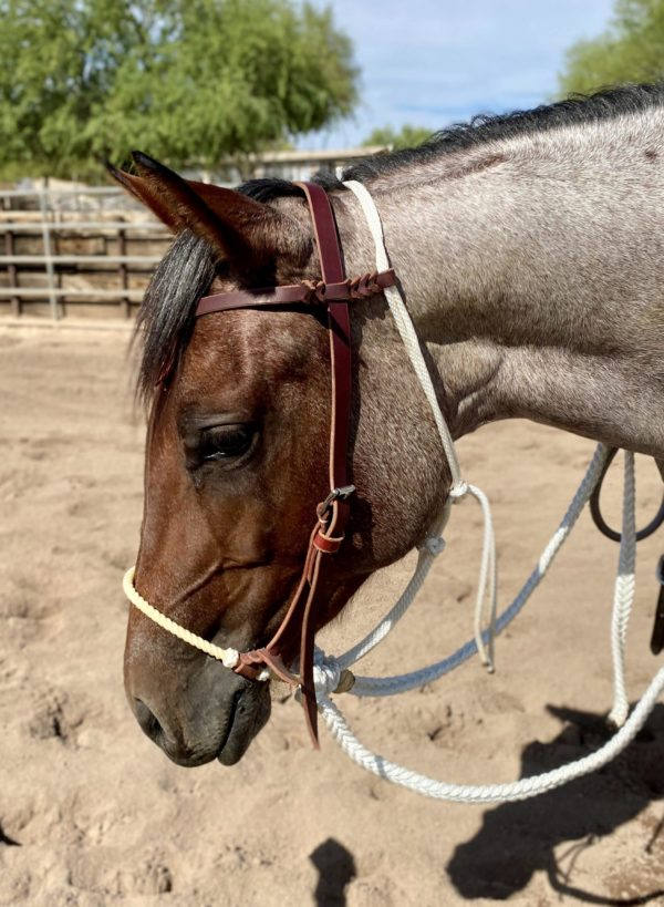 Lope-Rope-On-Horse